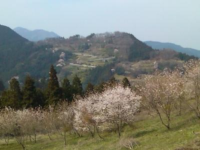城峰公園の桜を遠くより望んでみる