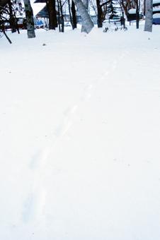 120101-21雪の上のあしあと