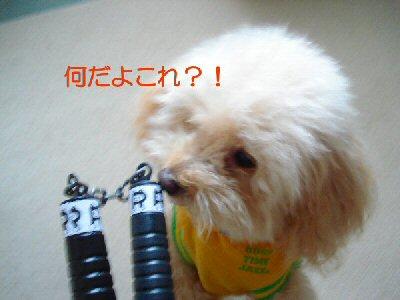 ヌンチャクと犬