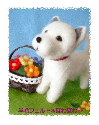 北海道犬くん2