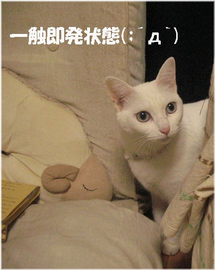 先住猫の癖に逃げなくてもねぇ(´д`)