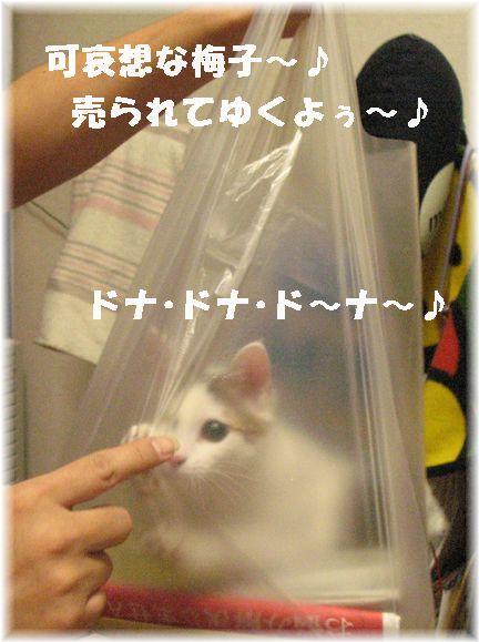 魚屋に猫が売ってるってスゴイ世界だなぁ?(;´д`)