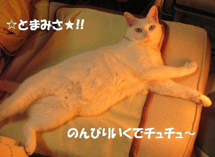 チュチュと現実逃避しちゃったり?(´д`?)(?´д`)?