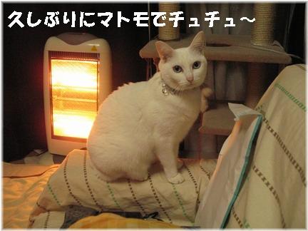 おすましチュチュちゃま?(* ゚д゚ *)