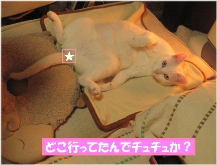 でも・・・ウチも幸せだよね?チュチュ、ハシタナイけど(^-^;)