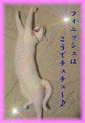 猫の着ぐるみで踊ってくれないかな?んな、あほな(´_ゝ`)