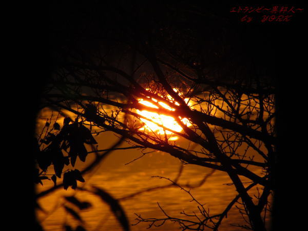 1453夕焼けの池120122