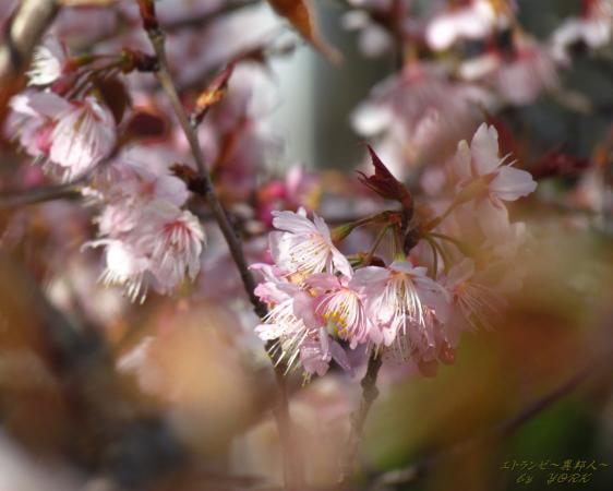 壁紙 1382  早咲きの桜1280×1024