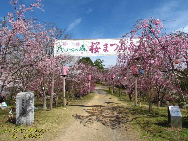 2397建部の森桜祭り120415