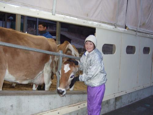ジャージー牛と春子