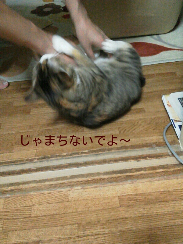 fc2_2013-08-20_01-11-58-770.jpg