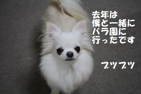 IMG_0622_20100530214627.jpg