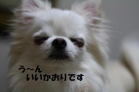 IMG_1502_20110223210449.jpg