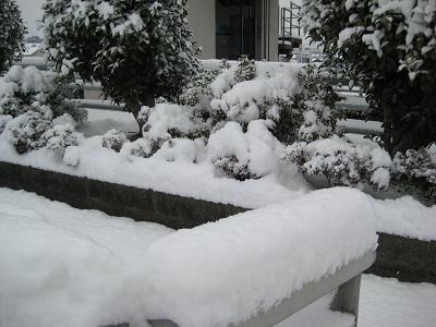 IMG_雪4911