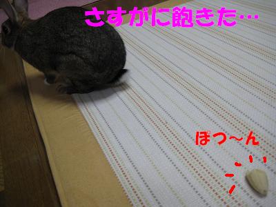 IMG_バナナ4871