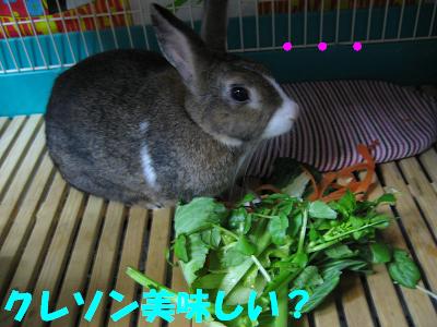 IMG_食欲4930