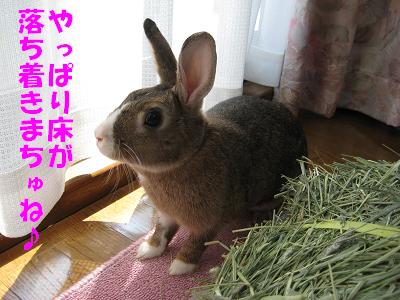 IMG_牧草5300