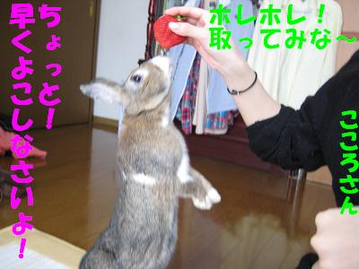 IMG_あまおう5375