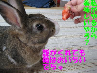 IMG_あまおう5381