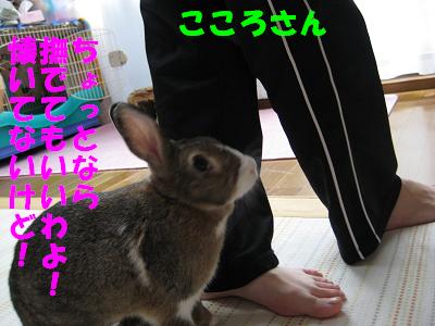 IMG_あまおう5399