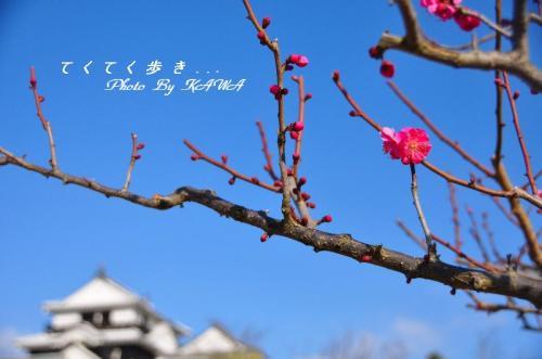 1松山城_7977