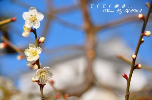 5松山城_7978