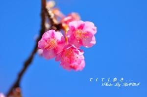 3野間馬_8226