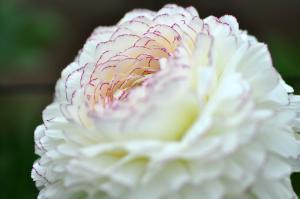 2花卉_8454
