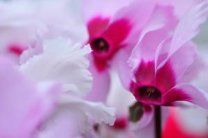4花卉_8481
