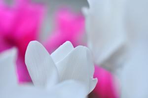 5花卉_8482