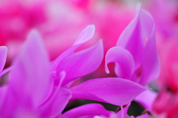 6花卉_8495