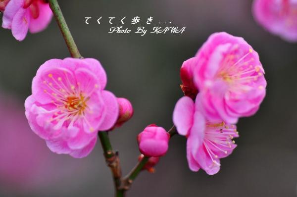 7七折_8634