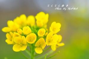 10七折_8636