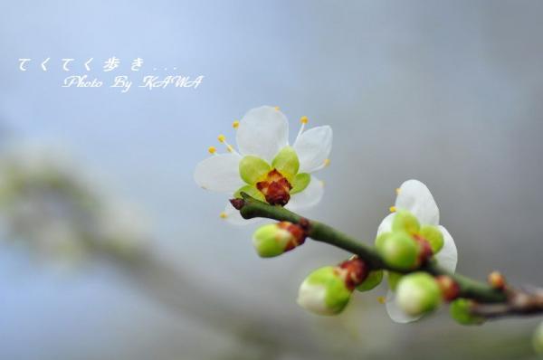 11南楽園_8838