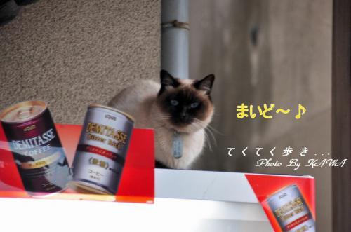自販機猫_8728