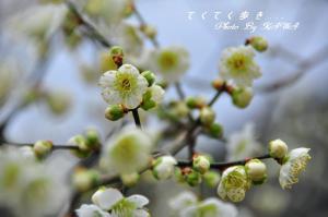 5七折_9159
