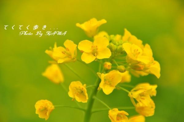 1見奈良_9200