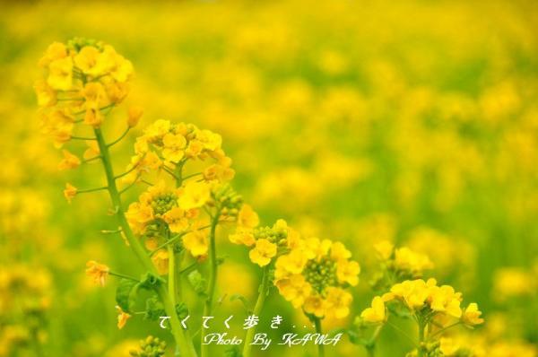 5見奈良_9195