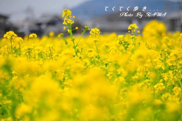 6見奈良_9199
