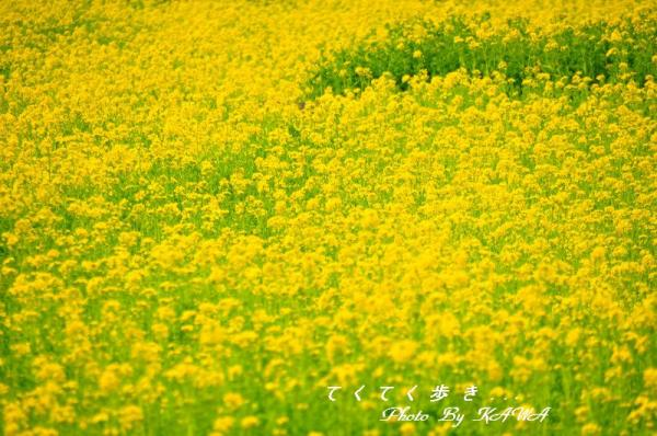 7見奈良_9205