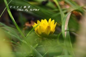 8緑化_9249