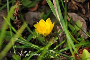 9緑化_9250
