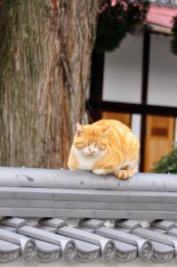 4猫_9305