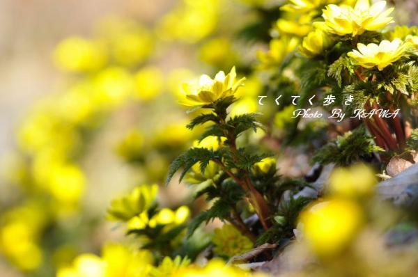 14南大王_9672