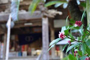 4浄瑠璃寺沈丁花