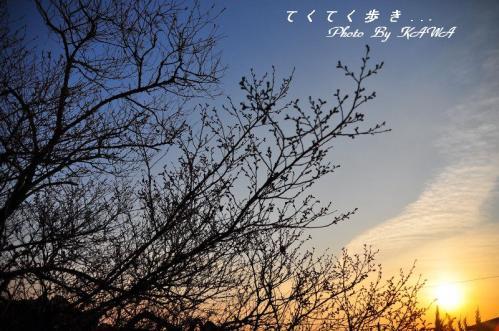 1十六日桜_0011