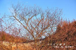 2十六日桜_0013