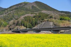 6五郎菜の花_0251