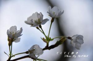 3大宝寺_1004
