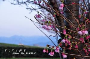 6赤坂泉_1021